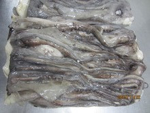 CLEANED FROZEN GIANT SQUID TENTACLES (Dosidicus Gigas) With High Quality on sale