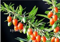 Goji extract/ Wolfberry Fruit Extract polysacchrides 10%,20%-70% 100% Natural