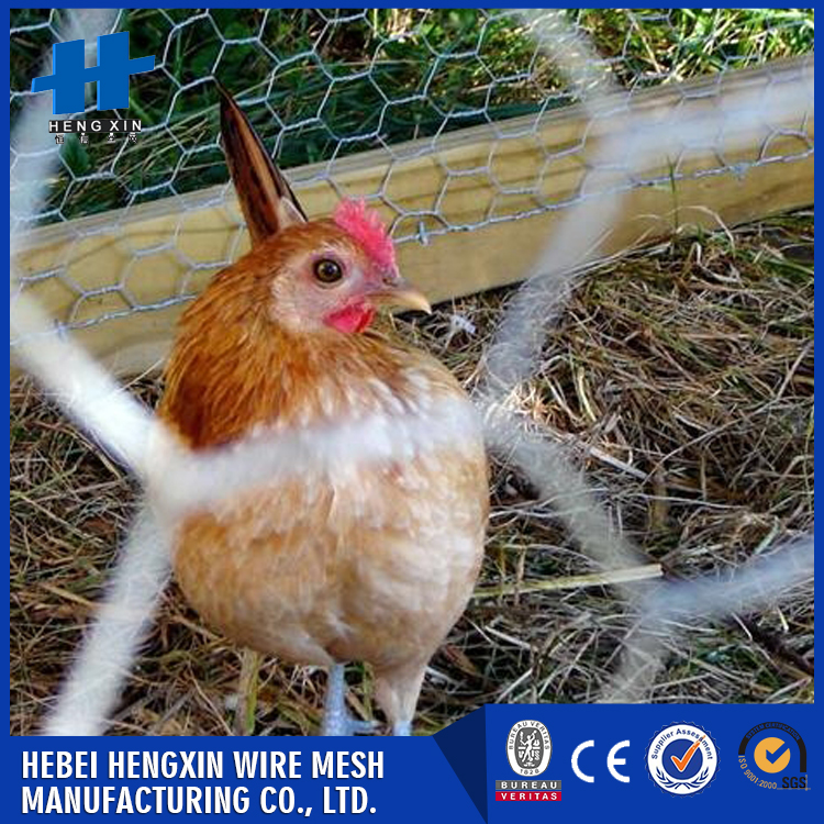 Cheap hexagonal chicken coop wire mesh made in China