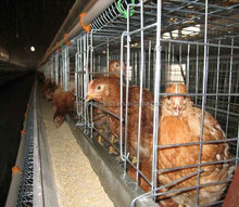 layer egg chicken cage design/battery cages for layers