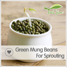 China Origin Green Mung Beans For Package