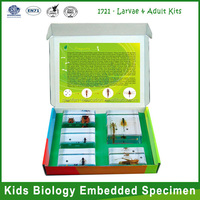 Qianfan Larva & Adult Kits Embedded Specimen science toys for Kindergarten