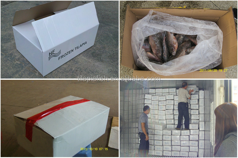 Fresh Frozen black tilapia fish whole round on sale