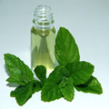 Hot Sale Natural Peppermint Essential Oil Price Lower