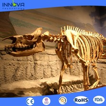 Innova-China manufacturer professional realistic dinosaur fossil model