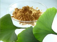 New Product Ginkgo Biloba Leaf Extract Powder