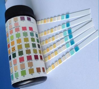 10 Parameters Uncut Sheet Urine Test Strips
