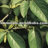 Chlorogenic Acid (5-98%) Eucommia Leaf Extract