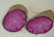 PURPLE YAM_GOOD PRICE_HIGH QUALITY FROM VIETNAM