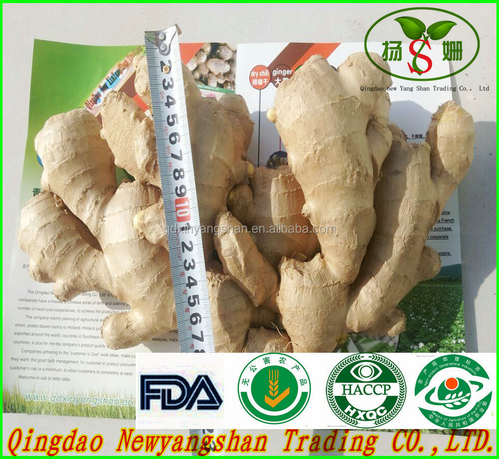 SHAN DONG GINGER KING/Fresh Ginger/DRIED GINGER