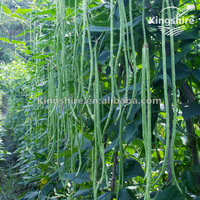 Chinese Yardlong Bean seed Chinese Long bean seed