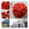 2015 new crop Go Qi Zi Wolfberry fruit Goji Berry Ningxia Goji Chinese herb medicine wolfberry