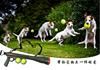 Wholesale ABS tennis ball gun for dog ,pet training Launcher Gun