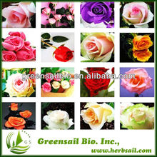 Supply 20 Kinds Rose Seeds With Factory Price