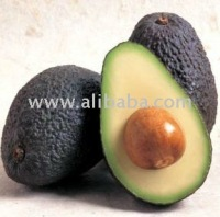 FRESH HASS AVOCADOS AGUACATES WITH QUALITY CERTIFICATIONS