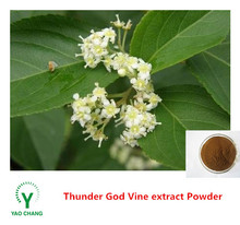 Manufactory supply Whole sale raw thunder god vine extract powder for sale with celastrol /tripterine 98% in bulk Extract