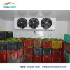 banana refrigerating room with different temperature