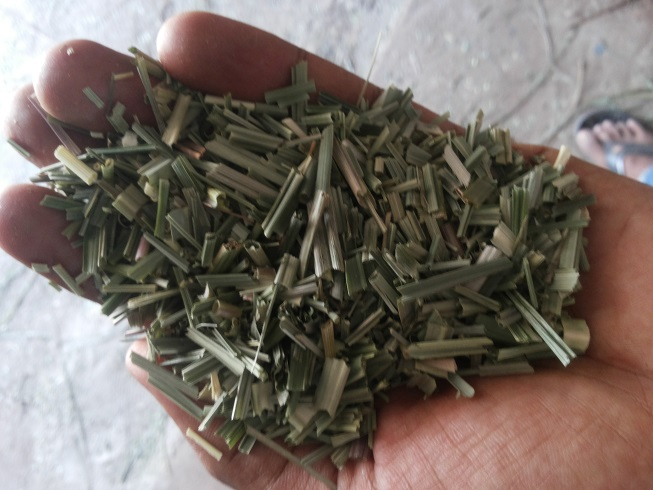 100% Pure & Natural Cymbopogon Citratus Supplier in Asia