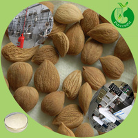 Hot sale bitter apricot seed extract free sample