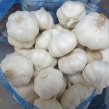 Best Selliong Healthy Fresh Garlic Specification