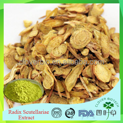 Organic health product 10:1 20:1 Baical Skullcap root extract