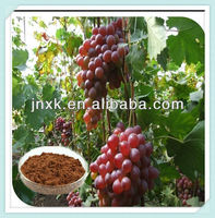 Grape seed extract with Polyphenol 80%
