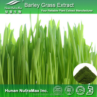 100% Natural Barley Grass P.E. 20:1 with competitive price