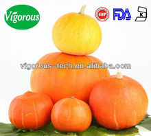 Pumpkin extract / marrow squash extract / cushaw (cuaurbit) extract