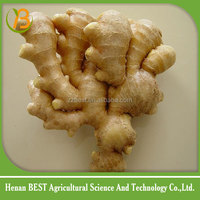 Supply chinese bulk fresh ginger with nice price