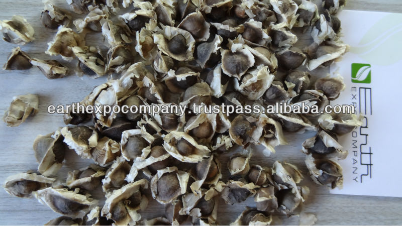 Moringa seeds for oil extraction