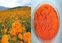 Natural Marigold extract Lutein 5%-95%