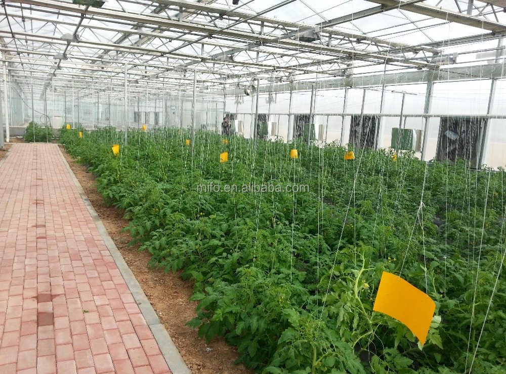 Hot Sale Fruits Solar Greenhouse