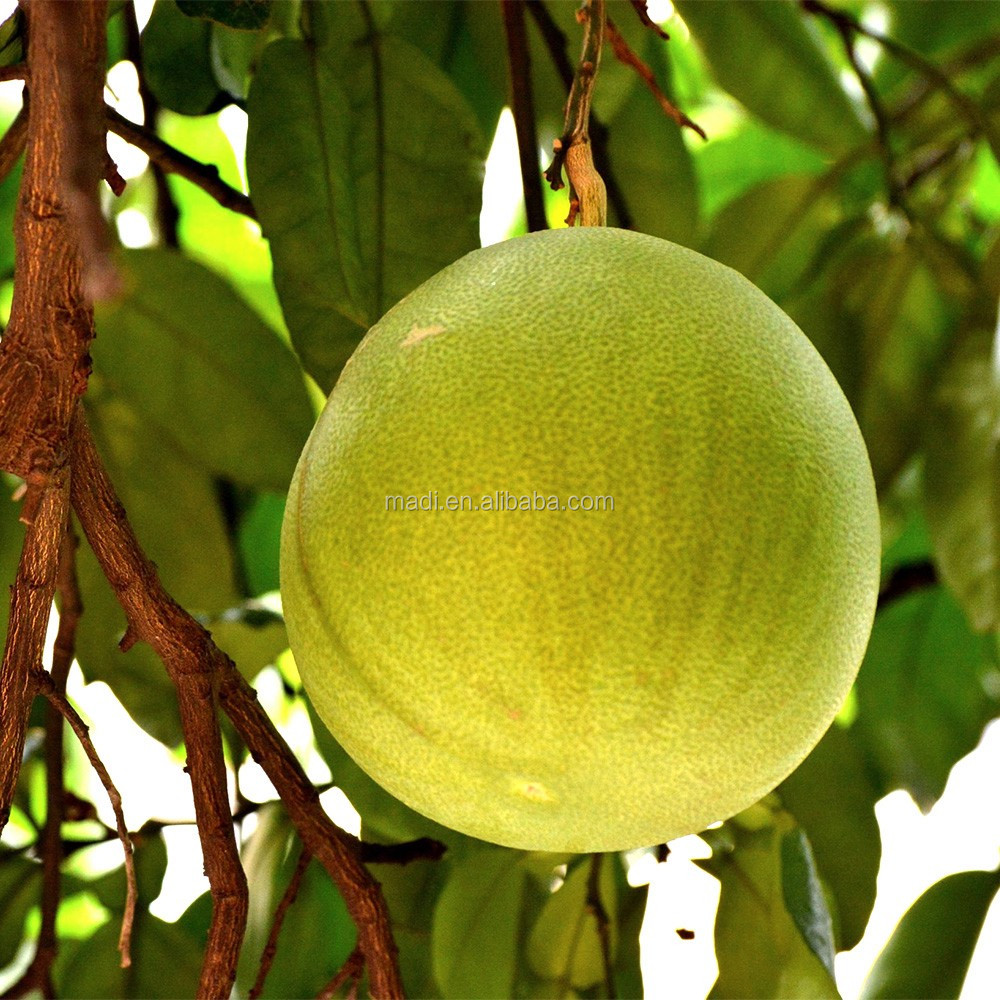buy bulk big and sweet guanxi pomelo,Delicious grapefruit
