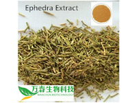 ma huang dry leaf medicine herbs ma huang extract powder