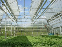 Anti UV polycarbonate sheet green house; twin-wall hollow polycarbonate sheet; green house ten years quality assurance