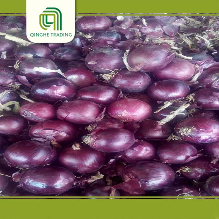 wholesale different types of fresh lowest red onion for sale