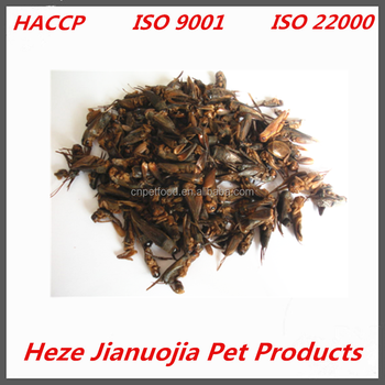 Dried Cricket Dried Insects for Sale Edible Insects for Birds