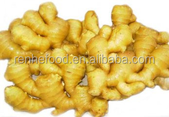 China 1kg young fresh ginger price with high quality
