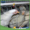 Hot Sales chicken wire mesh A type poultry layer chicken cage