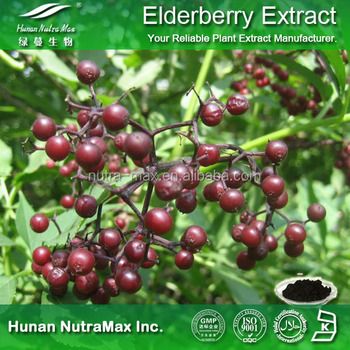 Powder of Elderberry Extract , Black Elderberry Extract , Sambucus Nigra Extract