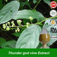 High Quality Thunder god vine Root extract powder lei gong teng extract Tripterygium wilfordii P.E. with Celastrol & triptolide