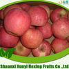 Supply Fresh apple qinguan apple for hot selling