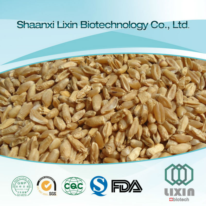 Hot selling GMP OEM factory supply best quality oat extract,oat powder protein