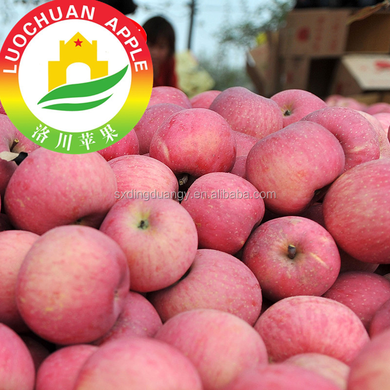 Common Cultivation Type Fresh Carton Box Fuji Apple Blush Red
