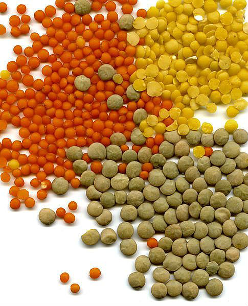RED LENTILS, GREEN LENTILS, YELLOW LENTILS