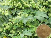Manufacturer high quality advanced low price organic hops extract