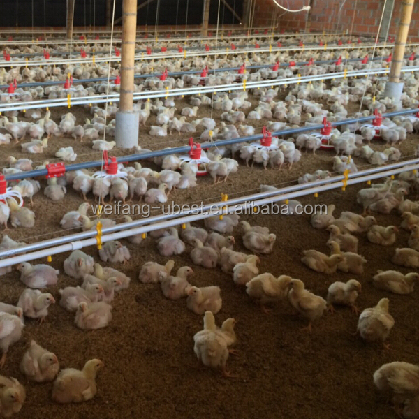 2015 complete controlled automatic chicken house/broiler shed/poultry farm equipment
