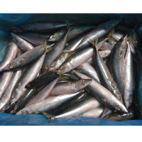 High Quality 150-300g Whole Round Frozen Pacific Mackerel With Best Exporter Canned Mackerel Fish