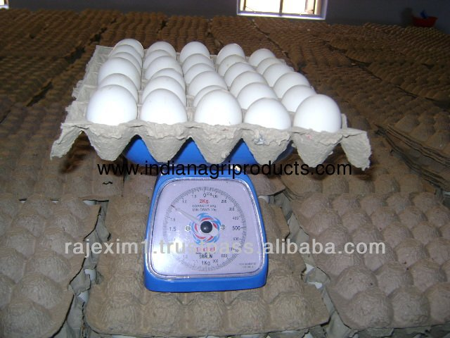 Indian White Eggs for Iran Market