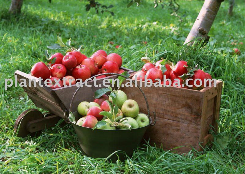 high-glass apple polyphenols